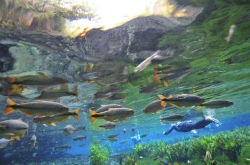 aquario1