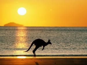 canguru1